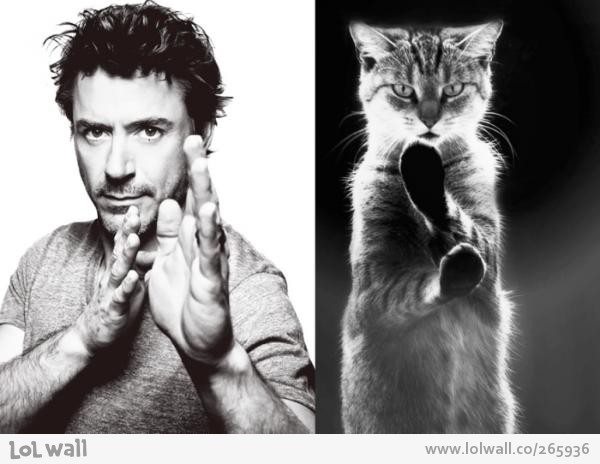 man-vs-cat