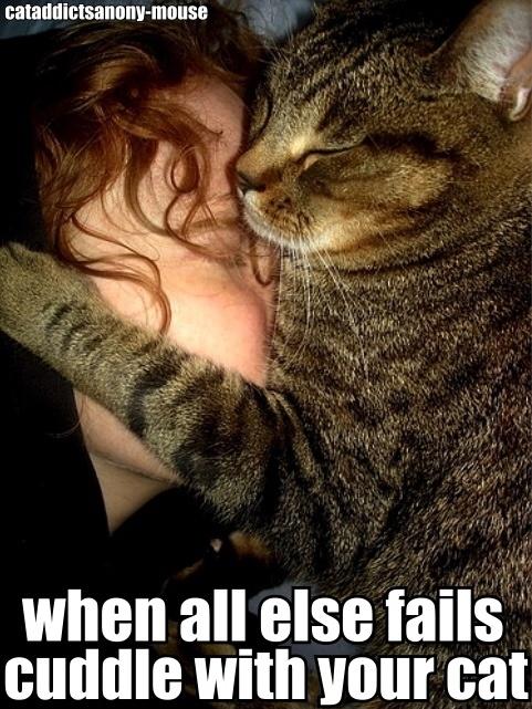 Cat-Wisdom-3