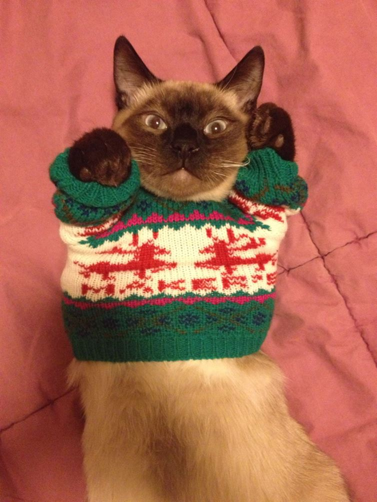 cat in ugly sweater