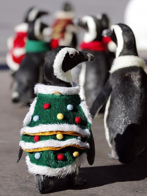 ugly christmas sweaters Top 10 Uglyest Christmas Sweaters Hot Penguin