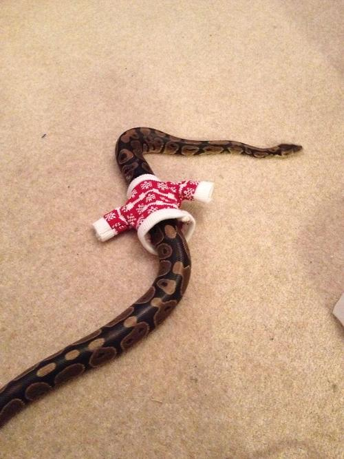 snake in ugly sweater